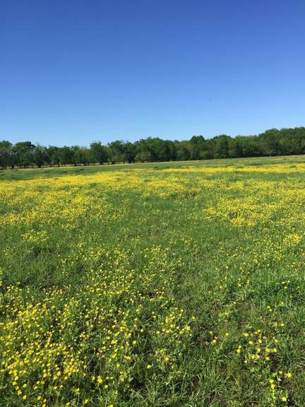 North East Texas Farmland for Sale