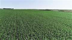 Crop & Pasture Land Near Turton, SD Online Land Auction!