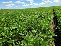 Crop Land Near Ivanhoe, MN Online Auction