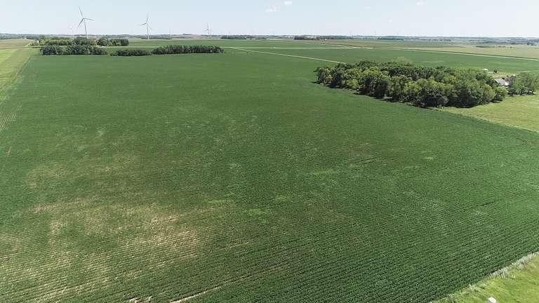 Crop Land Near Ivanhoe, MN Land Auction - 299.75 Acres