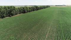 Crop Land Near Ivanhoe, MN Land Auction - 299.75 Acres