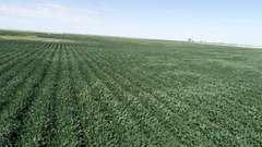 Crop Land Near Carpenter, SD Land Auction - 160 Acres