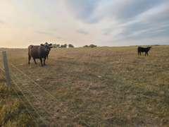 Hanson & Davison Co. SD Crop & Pasture Land - 406.86+/- Acres
