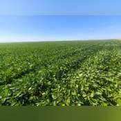 Crop Land Near Carpenter, SD Land Auction - 160 Acres