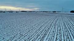 Lincoln County MN Crop Land Auction