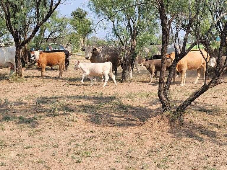 John Haynie Estate Cattle Farm & Ranch Auction