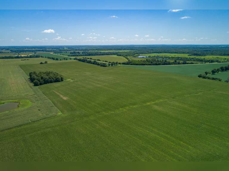 250 +/- ACRES ALONG COILTOWN RD NEBO, KY
