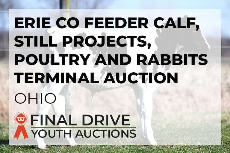 Erie Co Feeder Calf, Still Projects, Poultry and Rabbits Terminal Auction - Ohio