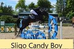 OXENDENE CANDY (Bay Colt)- Sire: Sligo Candy Boy, Sire of Dam: Ard VDL Douglas