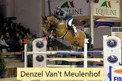 FUERTY DENZEL (Bay Colt)- Sire: Denzel Van't Meulenhof, Sire of Dam: Parco