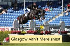 UNNAMED (Chestnut Colt)- Sire: VDL Glasgow Van't Merelsnest, Sire of Dam: Indoctro
