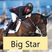 ARD GANG STAR (Bay Colt)- Sire: Big Star, Sire of Dam: Argentinus