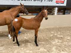 UNNAMED (Bay Filly)- Sire: Big Star, Sire of Dam: Quicksilber