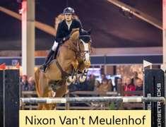 ARD ABLE (Chestnut Colt)- Sire: Nixon Van't Meulenhof, Sire of Dam: Calvados