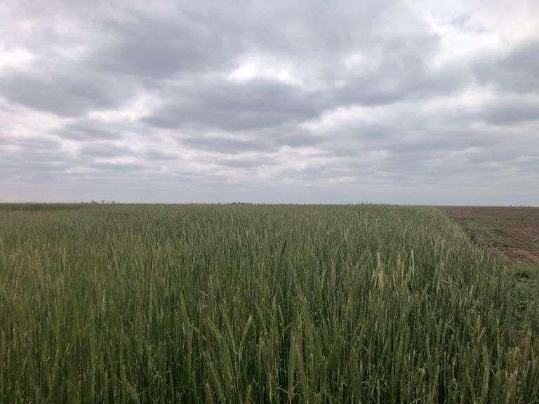 Deaf Smith Irrigated Farms Auction