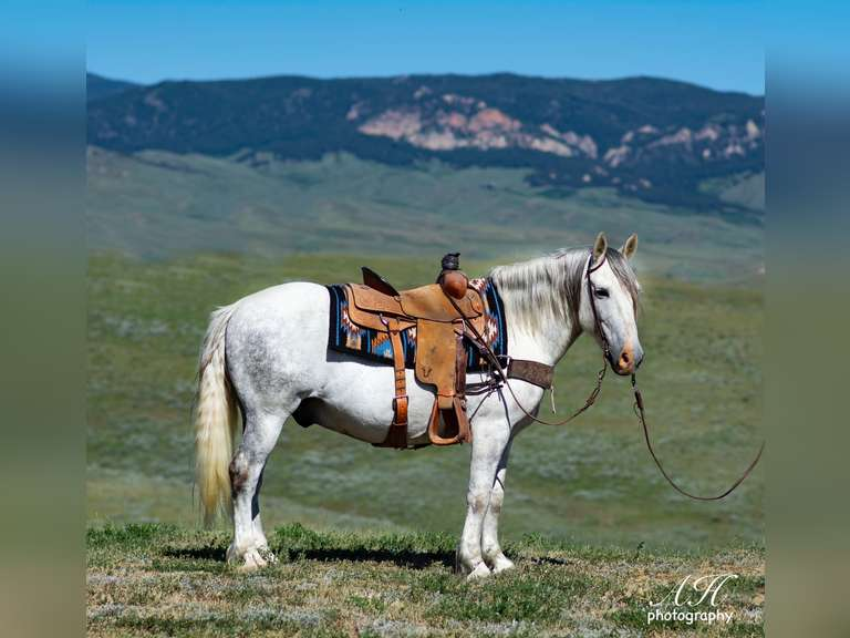 November 12th Eugene Horse Auction