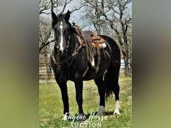 Black Betty - 10yr - 16.2hh - Mare