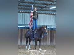 Lil Texas Poco Girl - 12yr - 15hh - Mare - AQHA