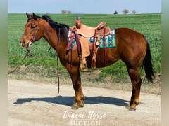 Rosie - 12yr - 14.3hh - mare