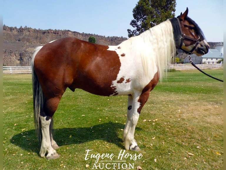 September 10th Eugene Horse Auction