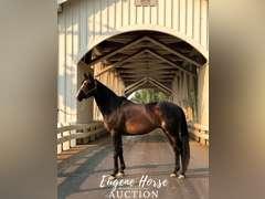TJS Passion - 13yr - 16.2hh - Gelding - Jockey Club