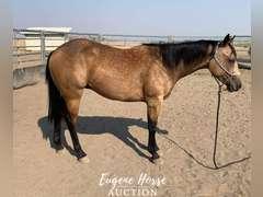 RSR Ride Forked - 2yr - Gelding - AQHA