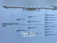 Chics N Guns Please - 6yr - 14.3HH - Gelding AQHA