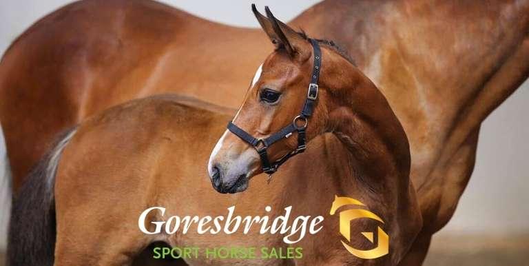 Broodmare Foal & Yearling Sale