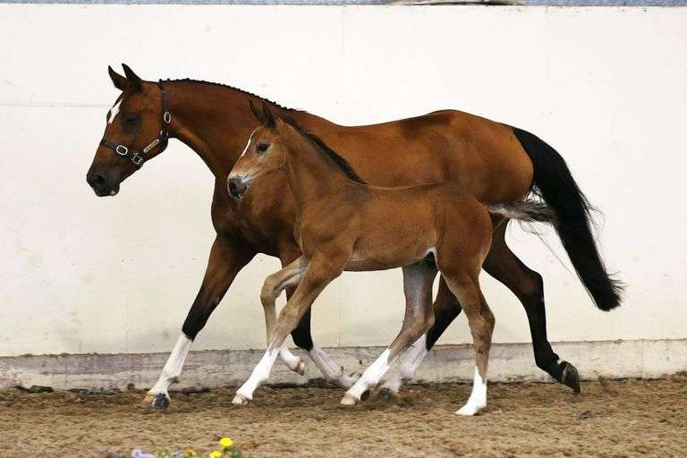 Broodmare Foal & Yearling Sale Day 2 (Oct 16th)