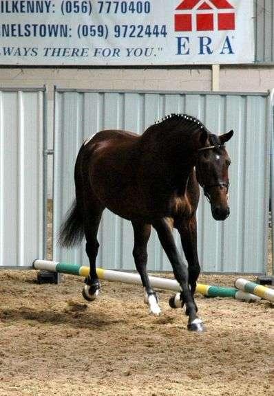 September Sport Horse Performance Sale Day 6 (Sept 15th)