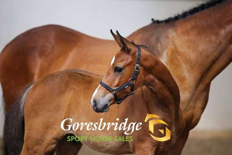 Broodmare Foal & Yearling Sale Day 1 (Oct 15th)
