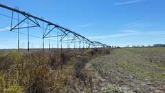 274+/- Acres in Mississippi County, AR - Online-Only Auction