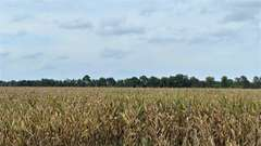 40+/- Acre Craighead County & 80+/- Acre Cross County, AR Online-Only Auction