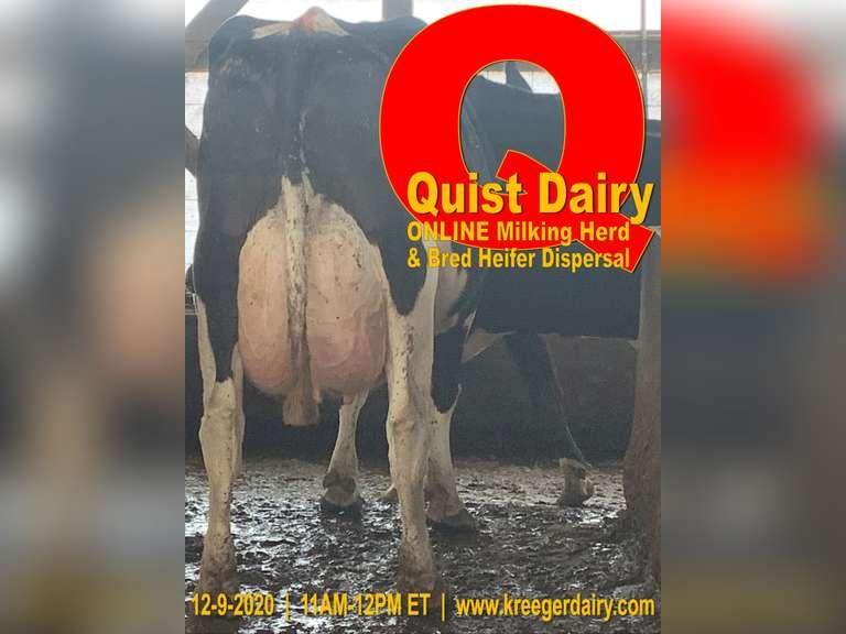 Quist Dairy Milking Herd & Bred Heifer Dispersal
