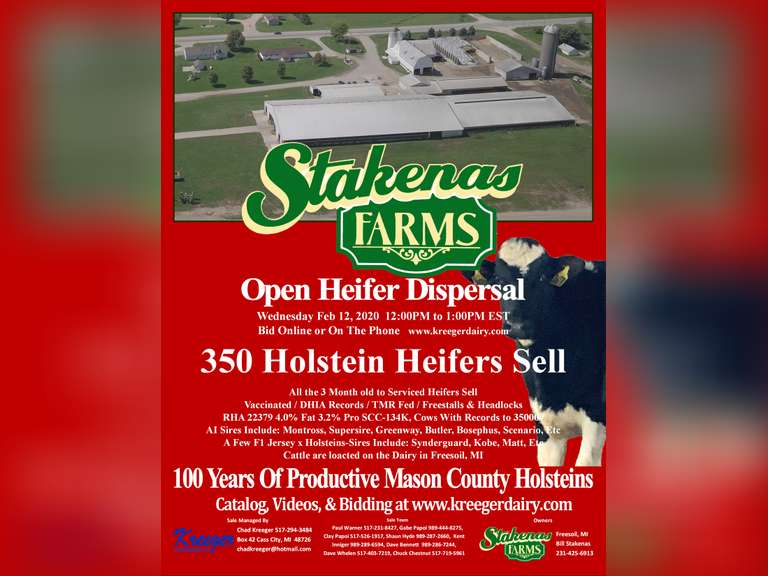 Stakenas Farms Open Heifer Dispersal