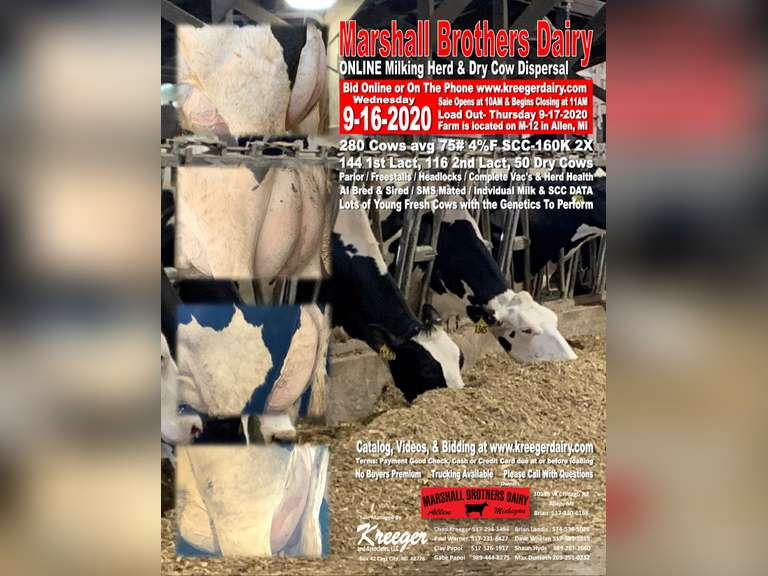 Marshall Brothers Milking Herd & Dry Cow Dispersal