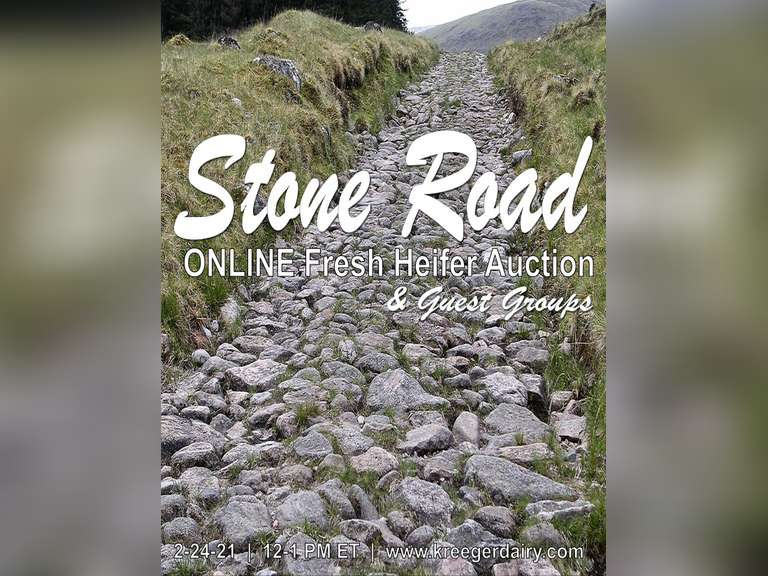 Stone Road Online Fresh Heifer Auction & Guest Groups