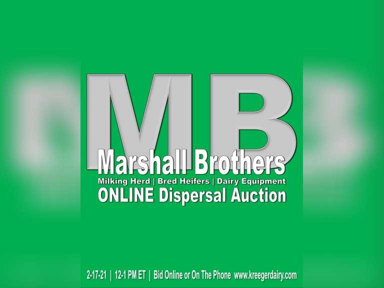 Marshall Brothers Milking Herd   Bred Heifers   Dairy Equipment Dispersal