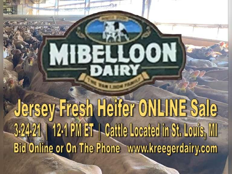 Mibelloon Online Jersey Fresh Heifer Sale