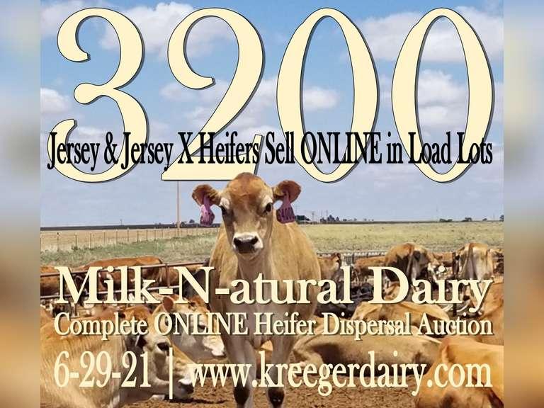 Milk-N-atural Dairy Complete Online Heifer Dispersal Auction