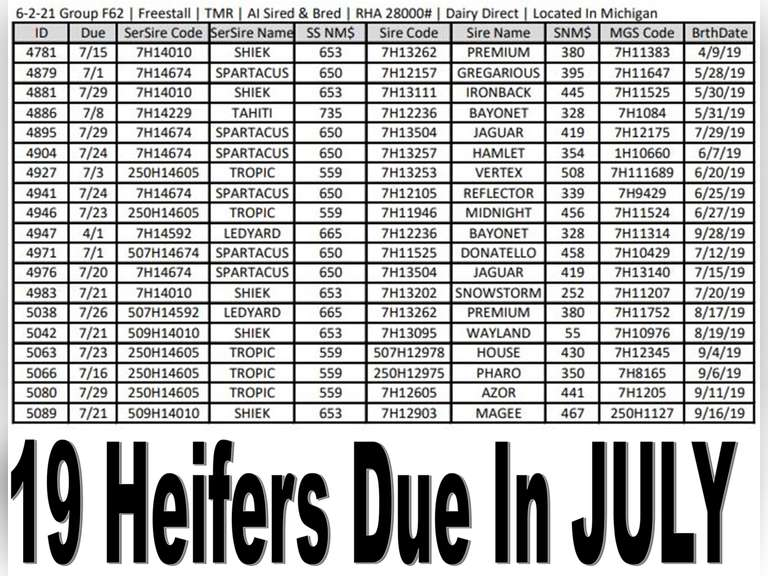 19 AI Bred & Sired Holstein Heifers (Michigan) | All Due In July | 28000# Herd | Complete Vaccinations & Herd Health | Freestall Housed | Priced at $1450 Per Head , Contact Chad Kreeger 517-294-3484 for more information