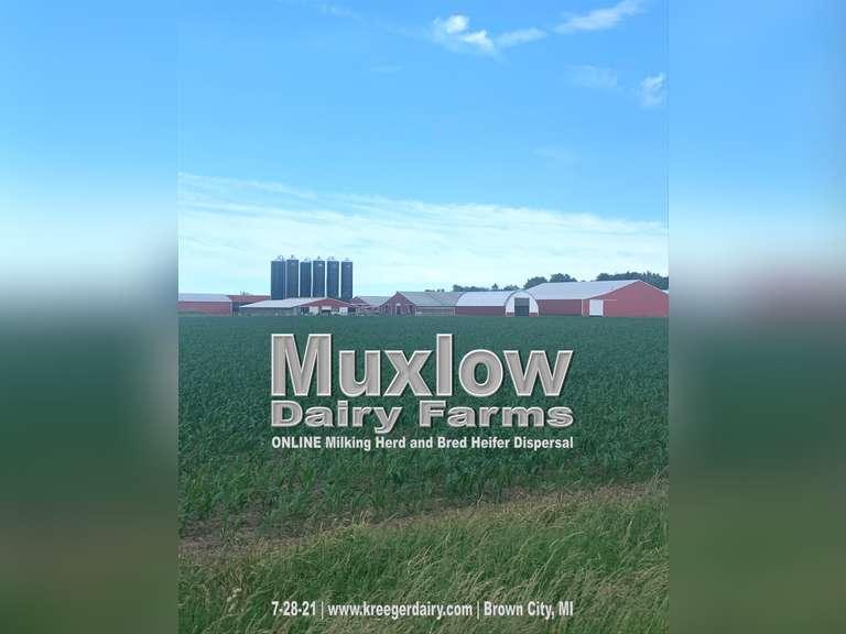 Muxlow Dairy Milking Herd & Bred Heifer Dispersal