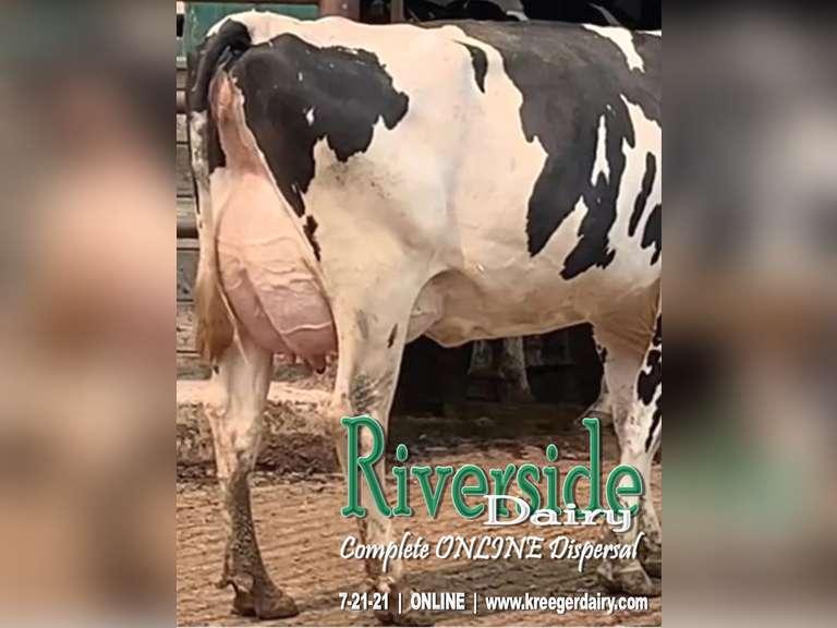 Riverside Dairy Complete Herd Dispersal