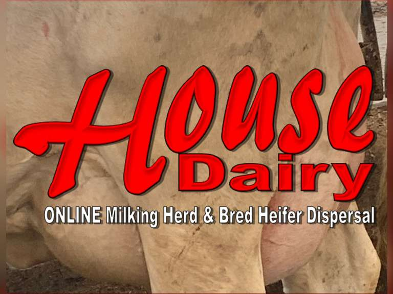 House Dairy Milking Herd & Bred Heifer Dispersal
