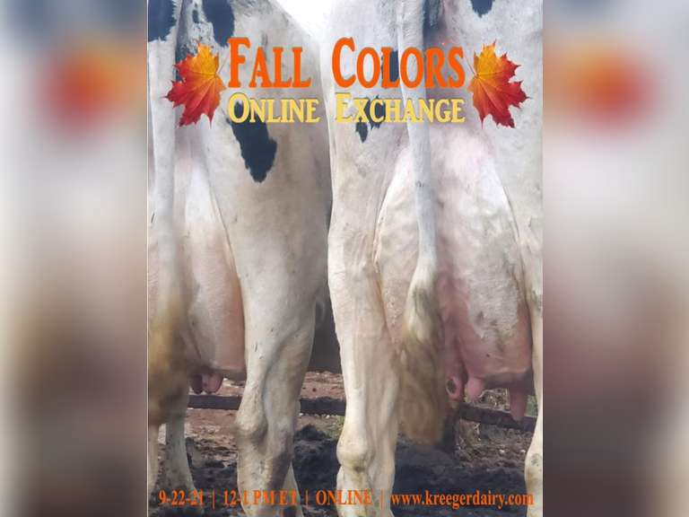 Fall Colors Online Exchange