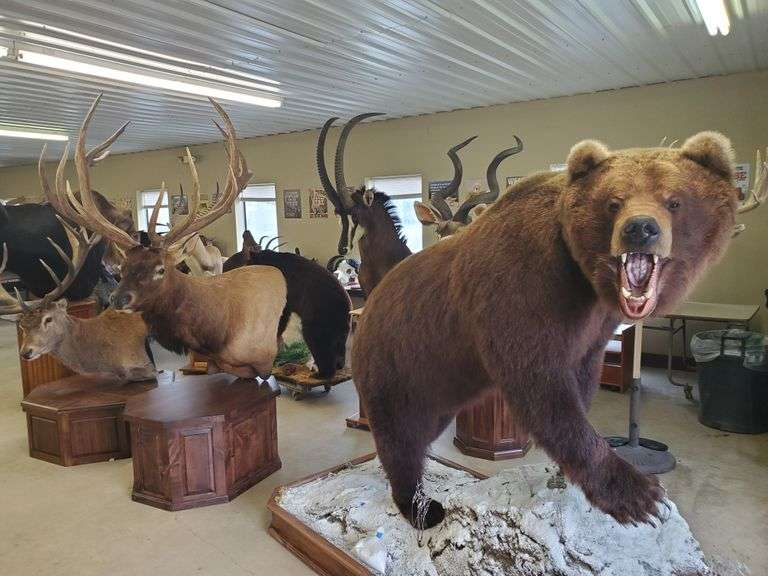 Firearms, Taxidermy & Sporting Goods - October 6th