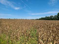 98 acres in Bates County, MO