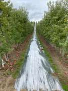 210± Acre Orchard
