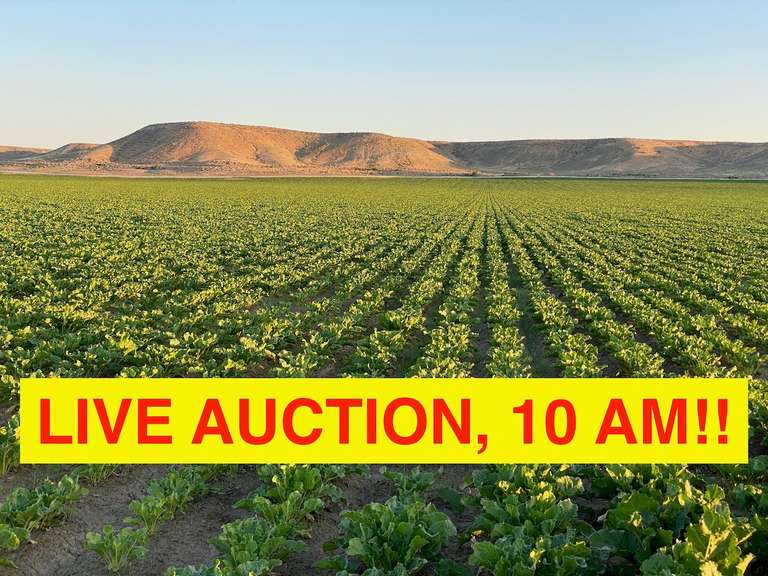 LIVE AUCTION!!  Werbelow Brothers Farm, Greybull, Wyoming 1,143 +/- acres