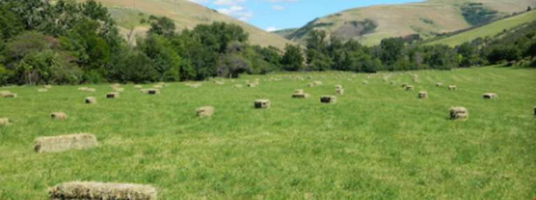 160± Acre Upper Dry Creek Farm & Ranch - Under Contract!